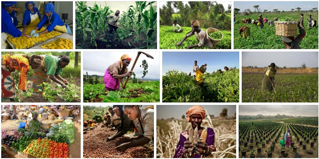 Africa Oldest food production