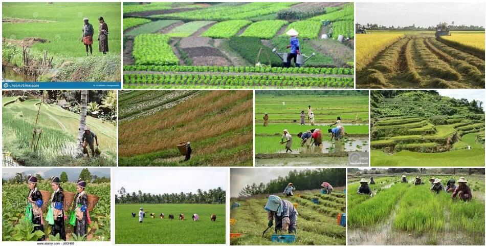 Asia agricultural cultures